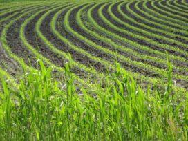 Meer loon in tuin- en akkerbouw