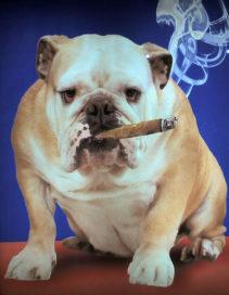 Ook Nederlandse werkgever baalt van rokers