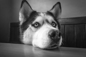 Hondenbaan op kantoor